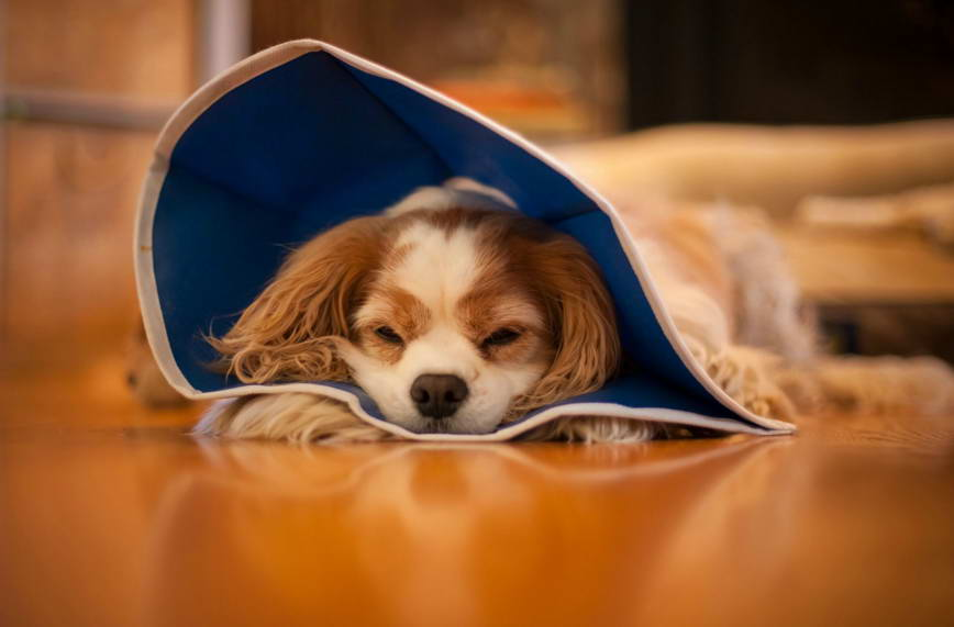 What S The Cost Of Spaying A Dog Petswithlove Us