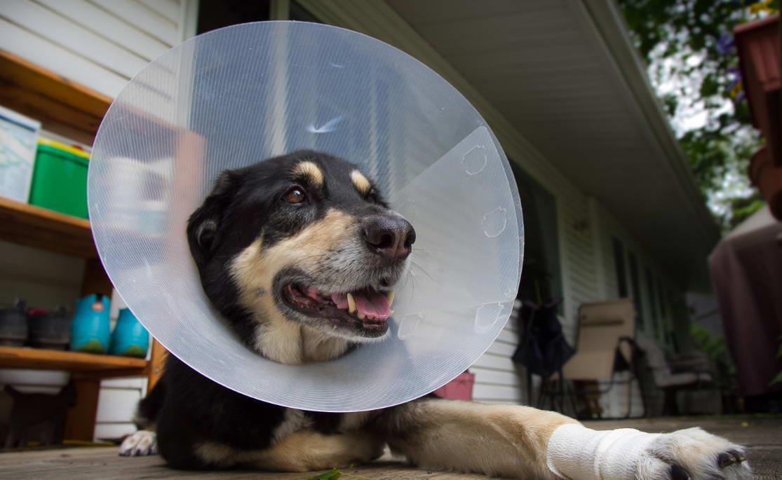 Buy Dog Cone Collar Petsmart | petswithlove.us