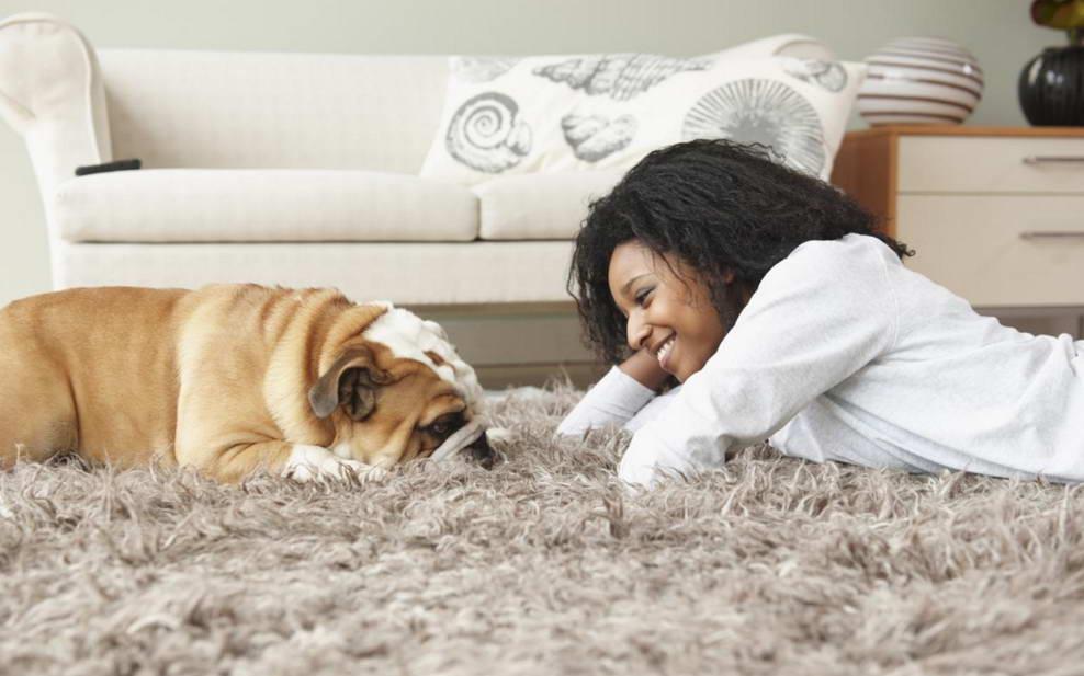how to get dog urine out of carpet. Black Bedroom Furniture Sets. Home Design Ideas