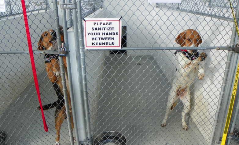 Local Dog Rescue
