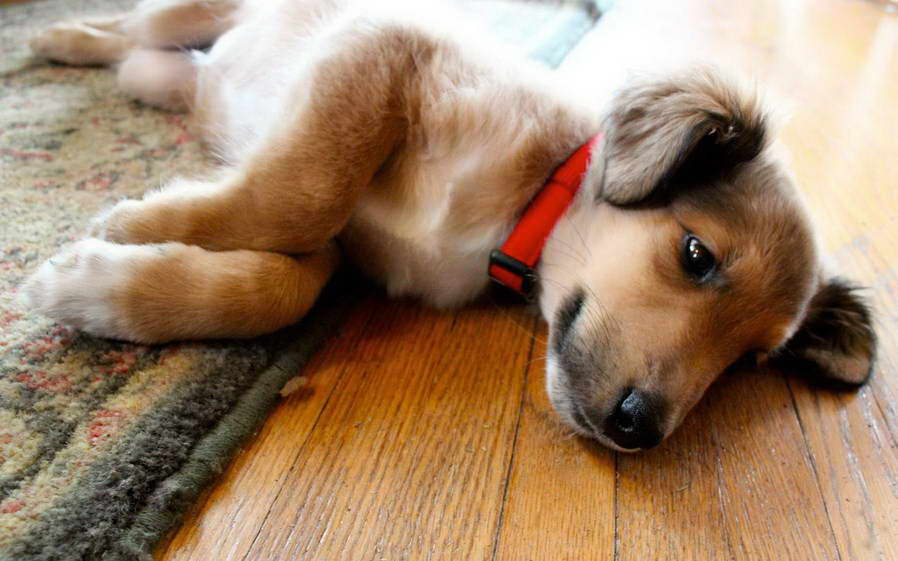 Find Dogs On Craigslist | petswithlove.us