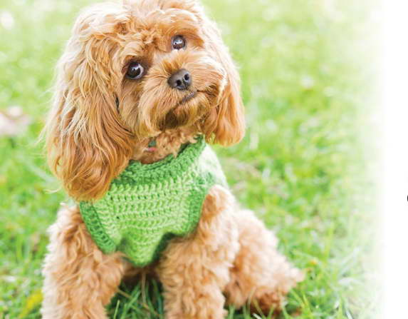 Dogs and Puppies for Sale and Adoption | Oodle Classifieds