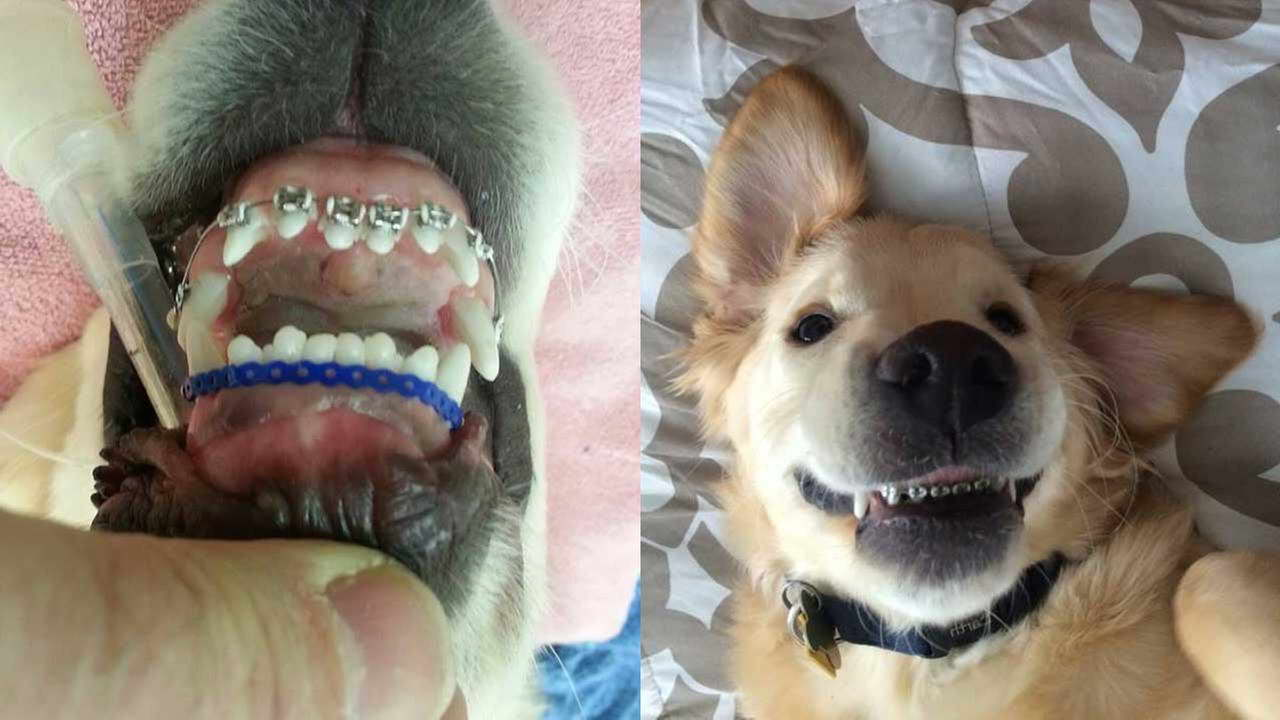 Get Braces For Dogs Cheap Petswithlove Us