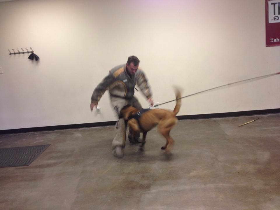 Best Dog Training Cary Nc
