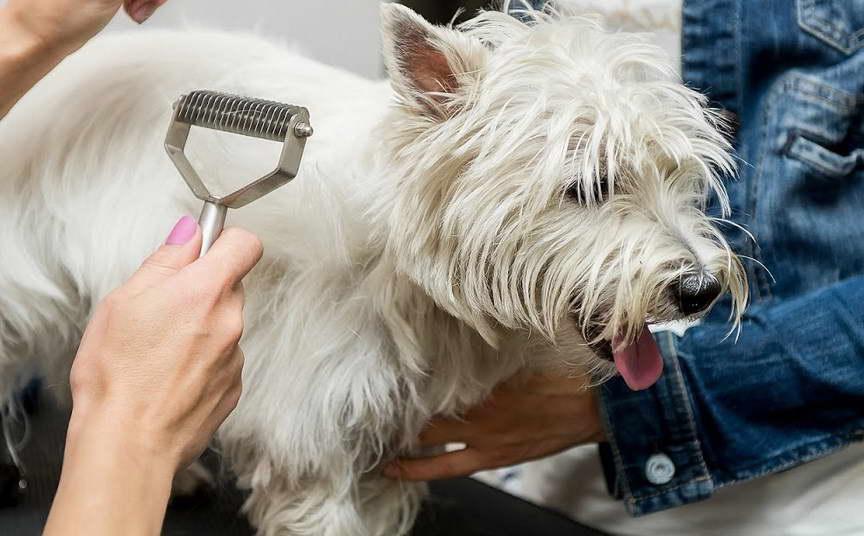 cheap dog grooming near me