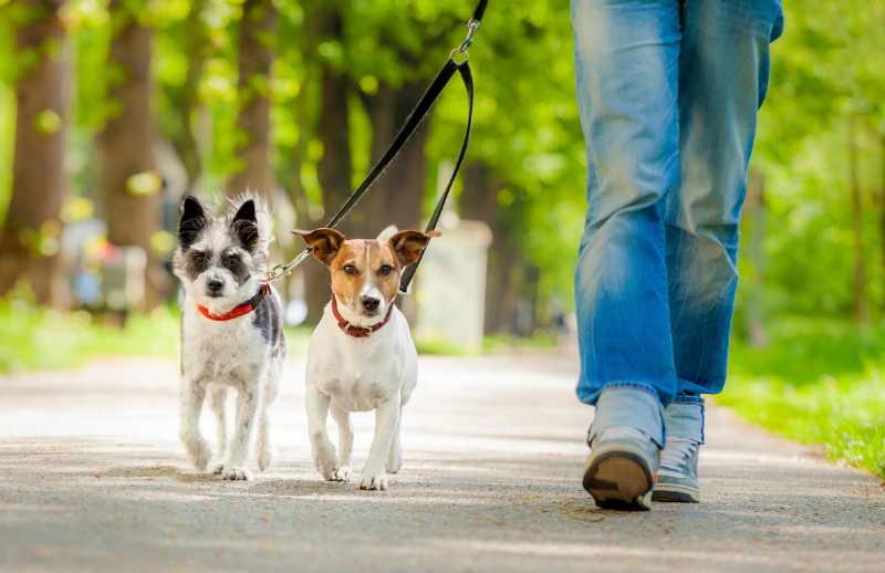 Houston, Texas Dog Walker - Dog Walker, Pet Sitter in ...